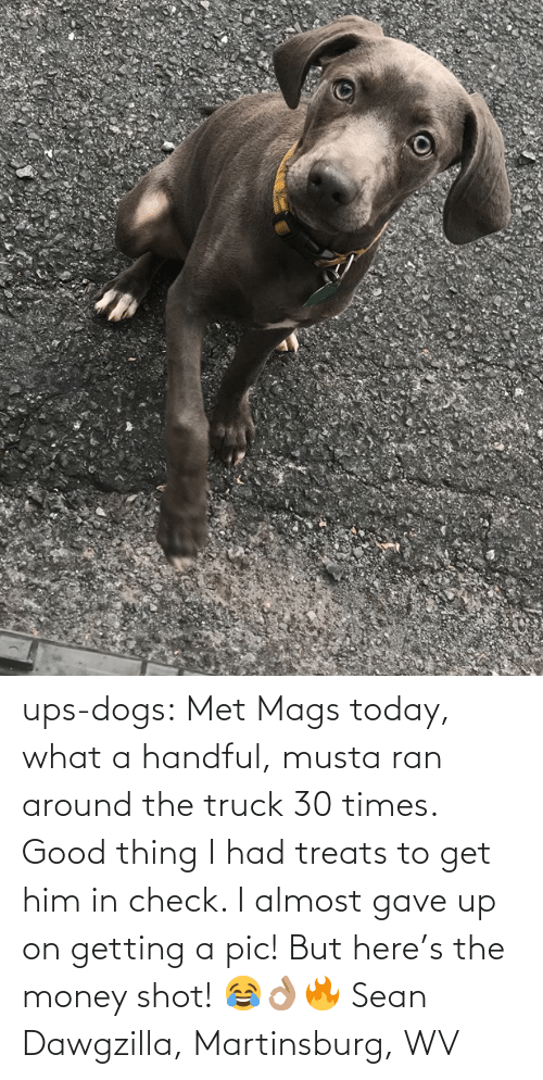 Dogs, Money, and Target: ups-dogs:  Met Mags today, what a handful, musta ran around the truck 30 times. Good thing I had treats to get him in check. I almost gave up on getting a pic! But here's the money shot! 😂👌🏽🔥 Sean Dawgzilla, Martinsburg, WV