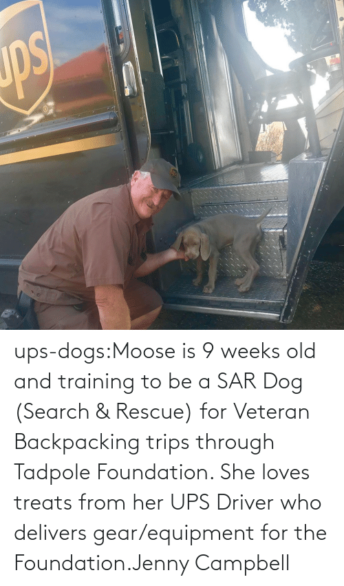 Dogs, Target, and Tumblr: ups-dogs:Moose is 9 weeks old and training to be a SAR Dog (Search & Rescue) for Veteran Backpacking trips through Tadpole Foundation. She loves treats from her UPS Driver who delivers gear/equipment for the Foundation.Jenny Campbell