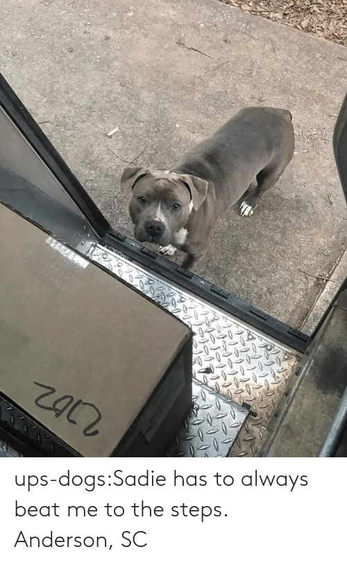Dogs, Target, and Tumblr: ups-dogs:Sadie has to always beat me to the steps. Anderson, SC