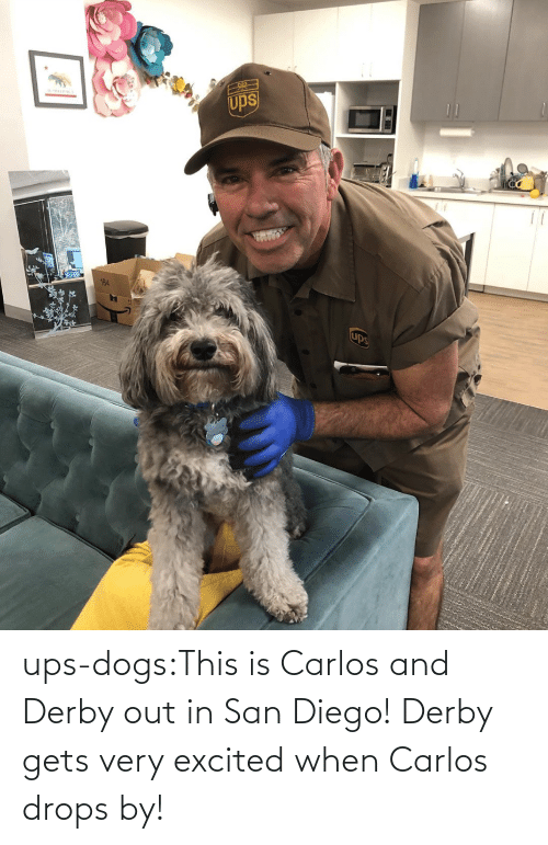 Dogs, Target, and Tumblr: ups-dogs:This is Carlos and Derby out in San Diego! Derby gets very excited when Carlos drops by!