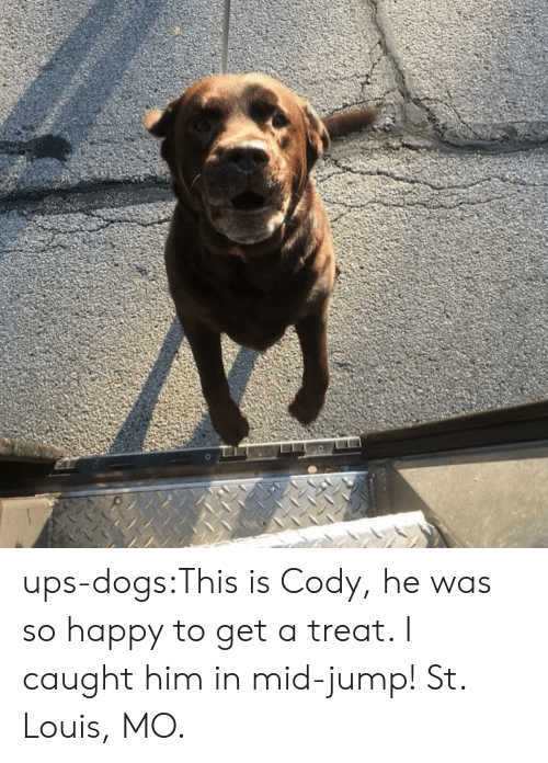 Dogs, Target, and Tumblr: ups-dogs:This is Cody, he was so happy to get a treat. I caught him in mid-jump! St. Louis, MO.