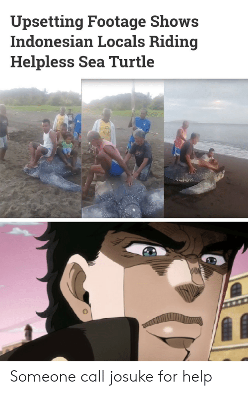 Help, Turtle, and Sea Turtle: Upsetting Footage Shows  Indonesian Locals Riding  Helpless Sea Turtle  wW Someone call josuke for help