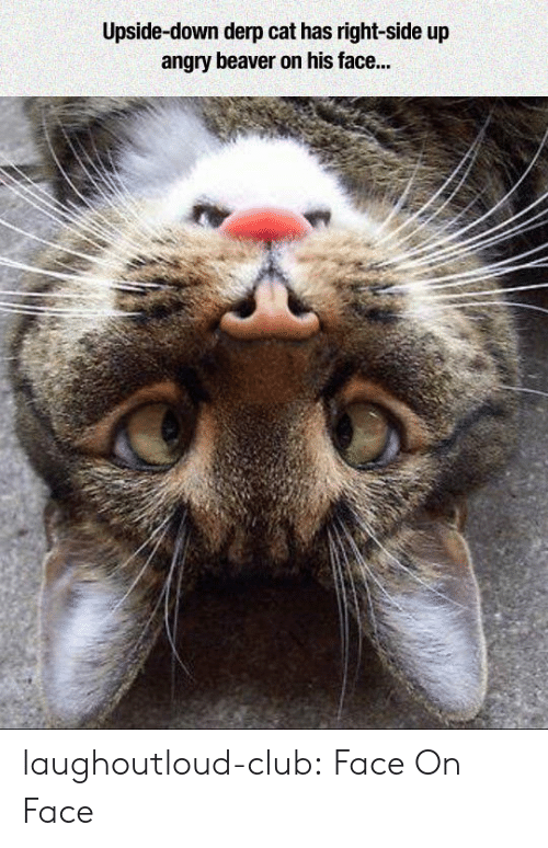 Club, Tumblr, and Blog: Upside-down derp cat has right-side up  angry beaver on his face... laughoutloud-club:  Face On Face