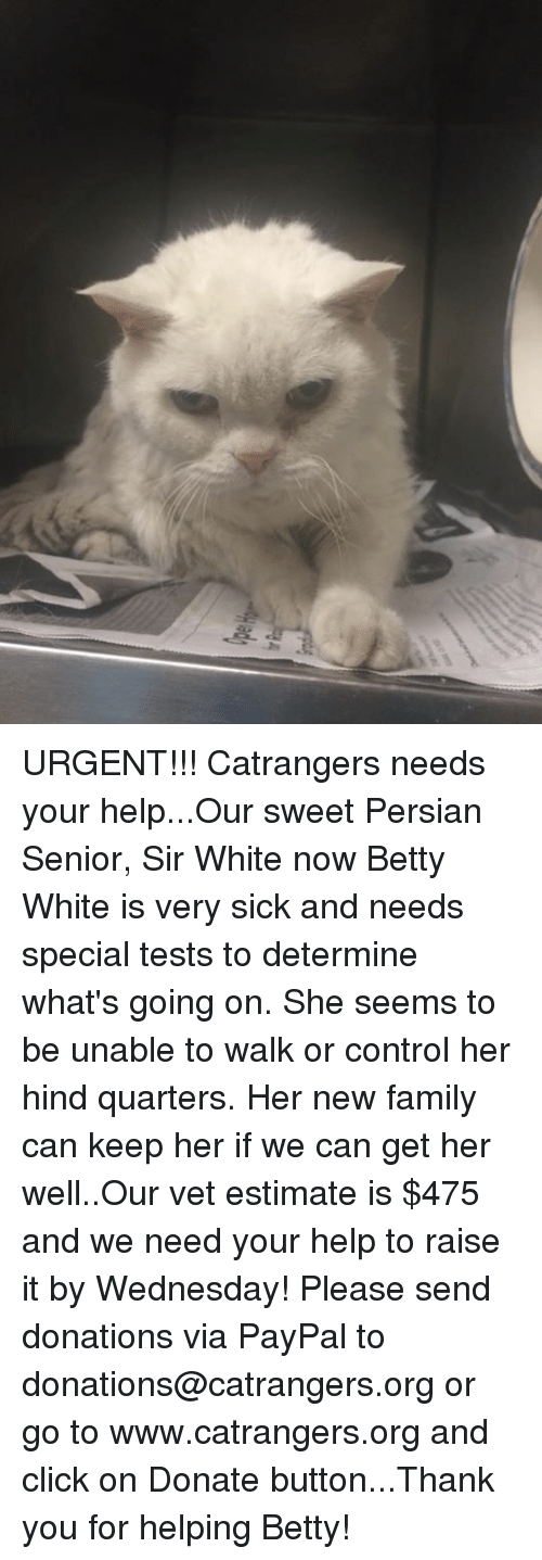 138522b29 urgent-catrangers-needs-your-help-our-sweet-persian-senior-sir-white-11108707.png