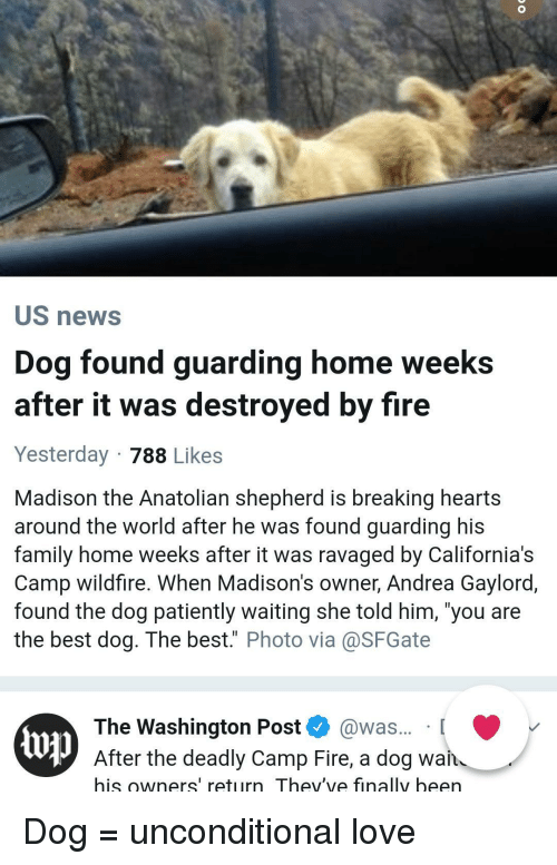 """Family, Fire, and Love: US news  Dog found guarding home weeks  after it was destroyed by fire  Yesterday 788 Likes  Madison the Anatolian shepherd is breaking hearts  around the world after he was found guarding his  family home weeks after it was ravaged by California's  Camp wildfire. When Madison's owner, Andrea Gaylord,  found the dog patiently waiting she told him, 'you are  the best dog. The best."""" Photo via@SFGate  The Washington Post @was... [  up  After the deadly Camp Fire, a dog wan  his owners' return Thev've finally been Dog = unconditional love"""