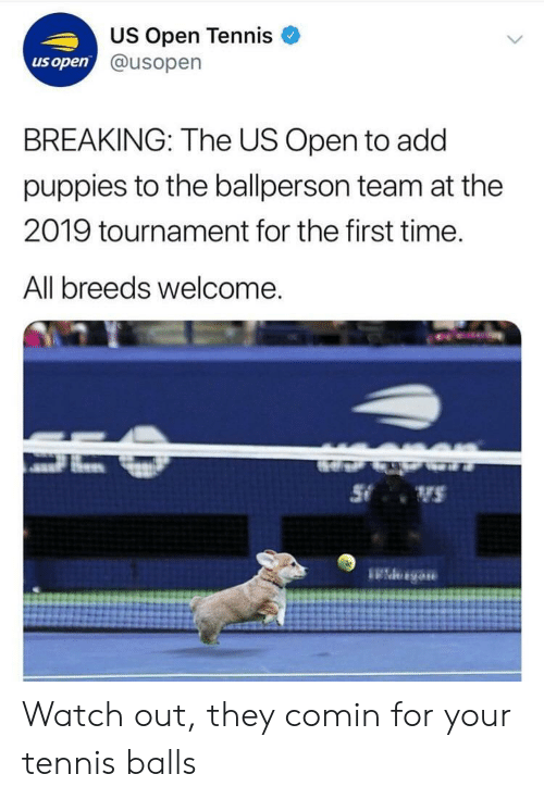 Puppies, Watch Out, and Tennis: US Open Tennis  @usopern  us open  BREAKING: The US Open to add  puppies to the ballperson team at the  2019 tournament for the first time.  All breeds welcome Watch out, they comin for your tennis balls