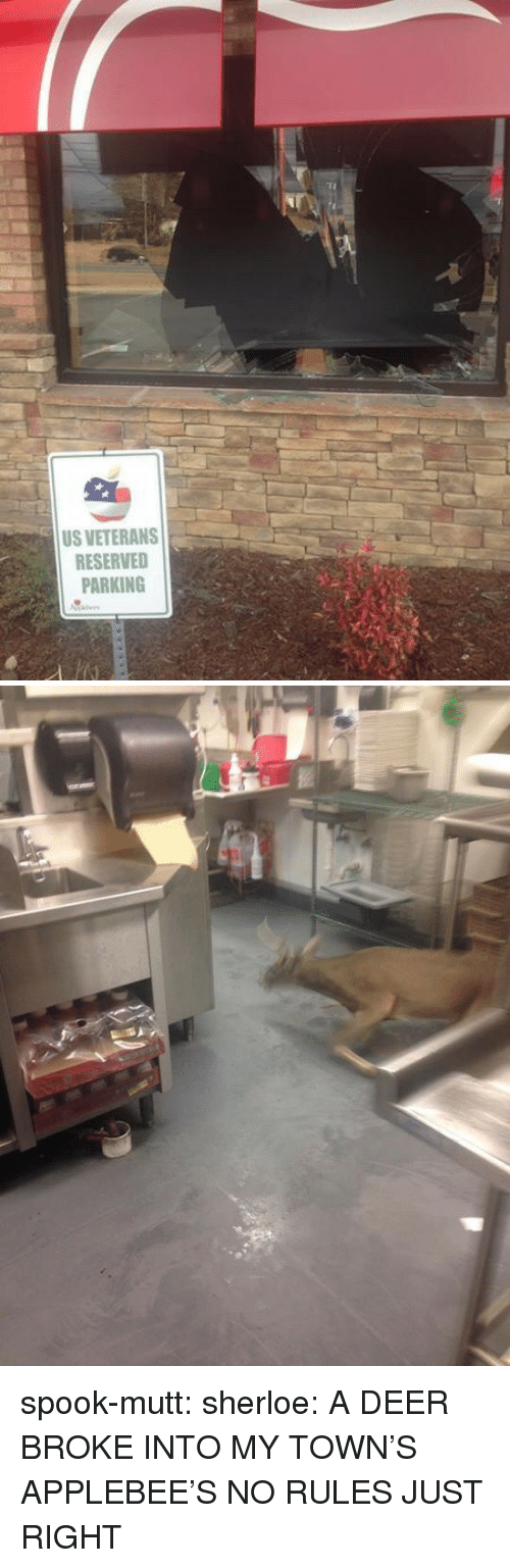 Deer, Tumblr, and Applebee's: US VETERANS  RESERVED  PARKING spook-mutt:  sherloe:  A DEER BROKE INTO MY TOWN'S APPLEBEE'S  NO RULES JUST RIGHT
