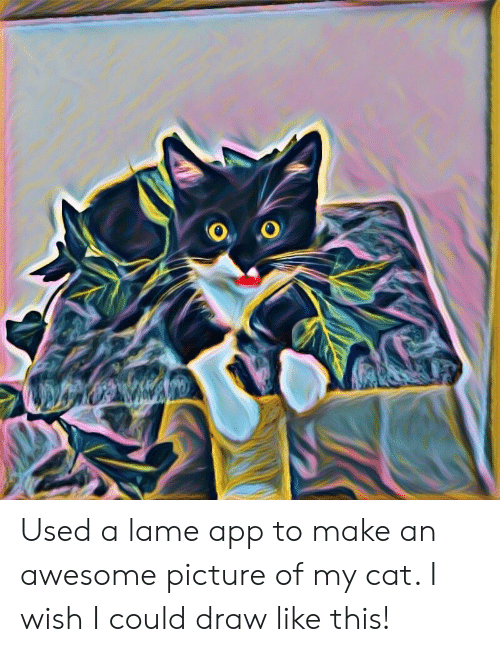 Used a Lame App to Make an Awesome Picture of My Cat I Wish