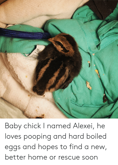 Soon..., Home, and Baby: USER DEAU  CYCLE DELICAT  REPASSER LE  ERA SEC  AILAVAR CON  SAR  A CICLO  RA MEDA  EL CISENC Baby chick I named Alexei, he loves pooping and hard boiled eggs and hopes to find a new, better home or rescue soon