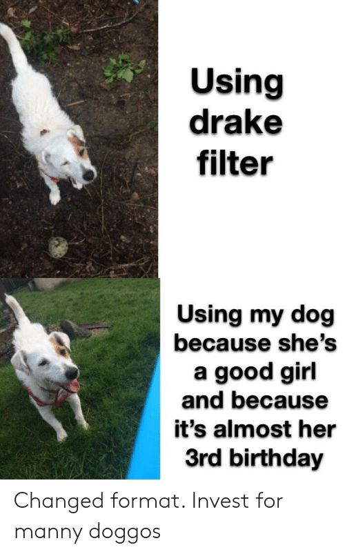Using Drake Filter Using My Dog Because She's a Good Girl