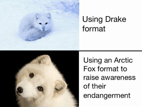 Drake, Fox, and Format: Using Drake  format  Using an Arctic  Fox format to  raise awareness  of their  endangerment