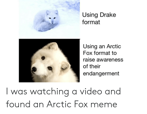 Drake, Meme, and Video: Using Drake  format  Using an Arctic  Fox format to  raise awareness  of their  endangerment I was watching a video and found an Arctic Fox meme