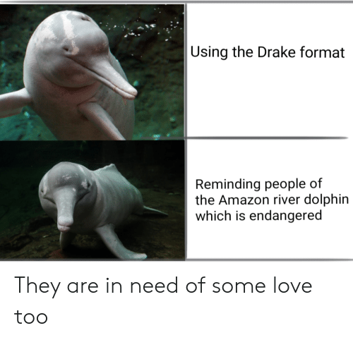 Amazon, Drake, and Love: Using the Drake format  Reminding people of  the Amazon river dolphin  which is endangered They are in need of some love too