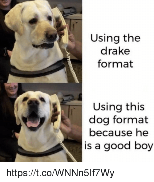 Drake, Memes, and Good: Using the  drake  format  Using this  dog format  because he  is a good boy https://t.co/WNNn5If7Wy