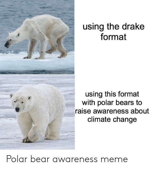 Drake, Meme, and Bear: using the drake  format  using this format  with polar bears to  raise awareness about  climate change Polar bear awareness meme