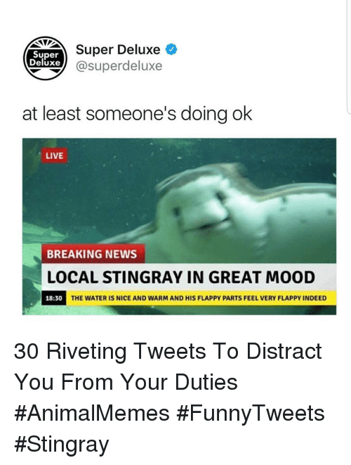 Mood, News, and Breaking News: UST Super Deluxe O  xe @superdeluxe  Super  Deluxe  at least someone's doing ok  LIVE  BREAKING NEWS  LOCAL STINGRAY IN GREAT MOOD  18:30  THE WATER IS NICE AND WARM AND HIS FLAPPY PARTS FEEL VERY FLAPPY INDEED 30 Riveting Tweets To Distract You From Your Duties #AnimalMemes #FunnyTweets #Stingray