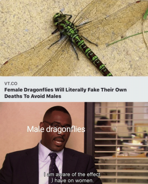 Fake, Women, and Deaths: Vт.cO  Female Dragonflies Will Literally Fake Their Own  Deaths To Avoid Males  Male dragonflies  I am aware of the effect  I have on women.