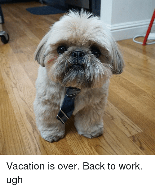 Vacation Is Over Back to Work Ugh | Meme on ME.ME