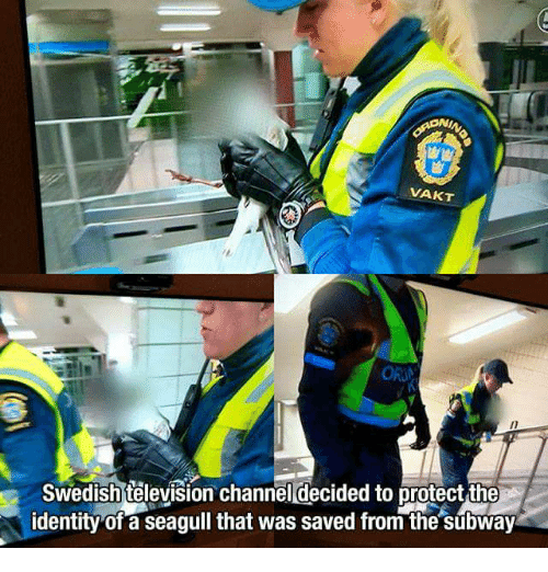 Subway, Television, and Swedish: VAKT  Swedish television channel decided to protect the  dentity of a seagull that was saved from the subway