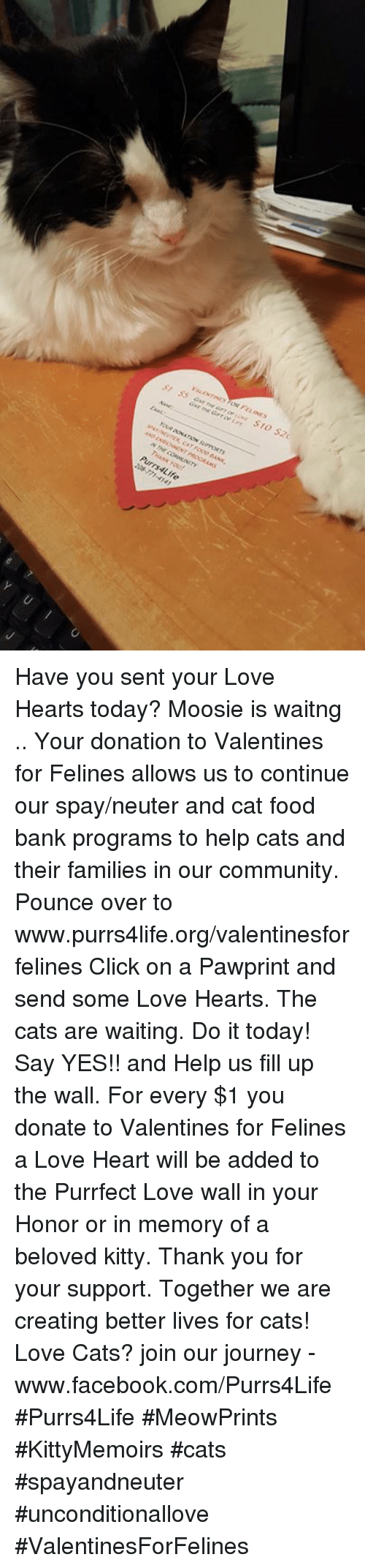Cats, Click, and Community: VALENTINES OR FELINES  R, ATFOOD BANK.  coeMENTY  THANK YOU!  Pur rs4Life  と Have you sent your Love Hearts today?  Moosie is waitng ..   Your donation to Valentines for Felines allows us to continue our spay/neuter and cat food bank programs to help cats and their families in our community.   Pounce over to www.purrs4life.org/valentinesforfelines Click on a Pawprint and send some Love Hearts. The cats are waiting. Do it today!  Say YES!! and Help us fill up the wall. For every $1 you donate to Valentines for Felines a Love Heart will be added to the Purrfect Love wall in your Honor or in memory of a beloved kitty.  Thank you for your support. Together we are creating better lives for cats!  Love Cats? join our journey - www.facebook.com/Purrs4Life #Purrs4Life #MeowPrints #KittyMemoirs #cats #spayandneuter #unconditionallove #ValentinesForFelines