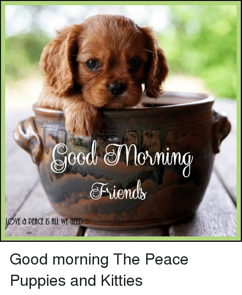 Ve Peace Is All We Mee Good Morning The Peace Puppies And Kitties