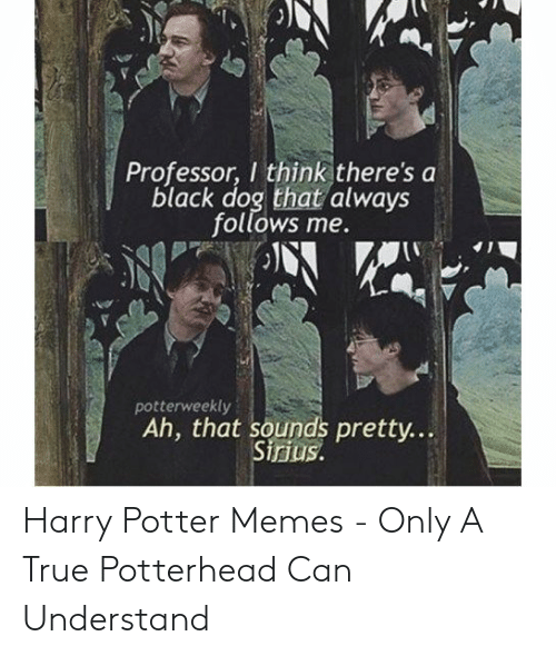 Harry Potter, Memes, and True: Ve  Professor, I think there's a  black dog that always  follows me.  potterweekly  Ah, that sounds pretty...  irius Harry Potter Memes - Only A True Potterhead Can Understand