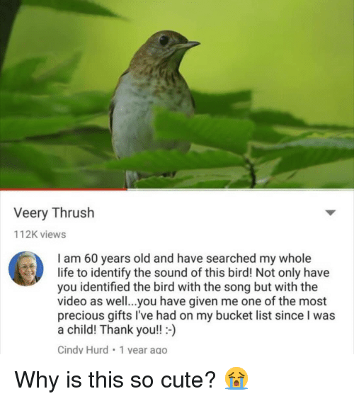 Bucket List, Cute, and Life: Veery Thrush  112K views  I am 60 years old and have searched my whole  life to identify the sound of this bird! Not only have  you identified the bird with the song but with the  video as well...you have given me one of the most  precious gifts I've had on my bucket list since I was  a child! Thank you!!)  Cindy Hurd 1 vear ago Why is this so cute? 😭