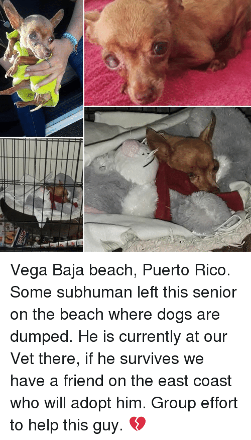 Dogs, Memes, and Beach: Vega Baja beach, Puerto Rico.  Some subhuman left this senior on the beach where dogs are dumped.  He is currently at our Vet there, if he survives we have a friend on the east coast who will adopt him.  Group effort to help this guy.  💔