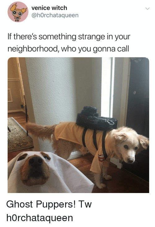 Memes, Ghost, and 🤖: venice witch  @hOrchataqueen  If there's something strange in your  neighborhood, who you gonna call Ghost Puppers! Tw h0rchataqueen