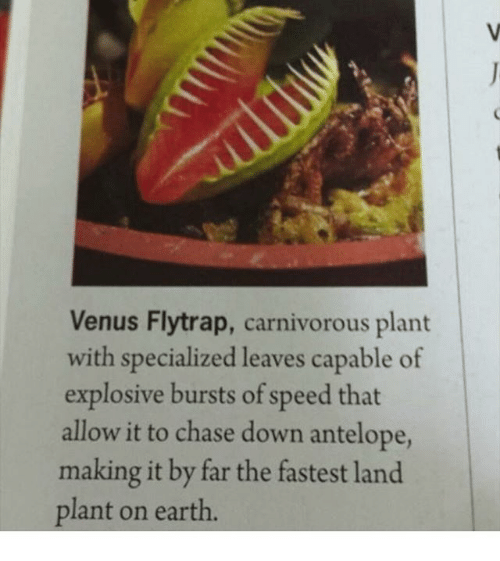 Venus flytrap carnivorous plant with specialized leaves capable of memes chase and earth venus flytrap carnivorous plant with specialized leaves capable ccuart Choice Image