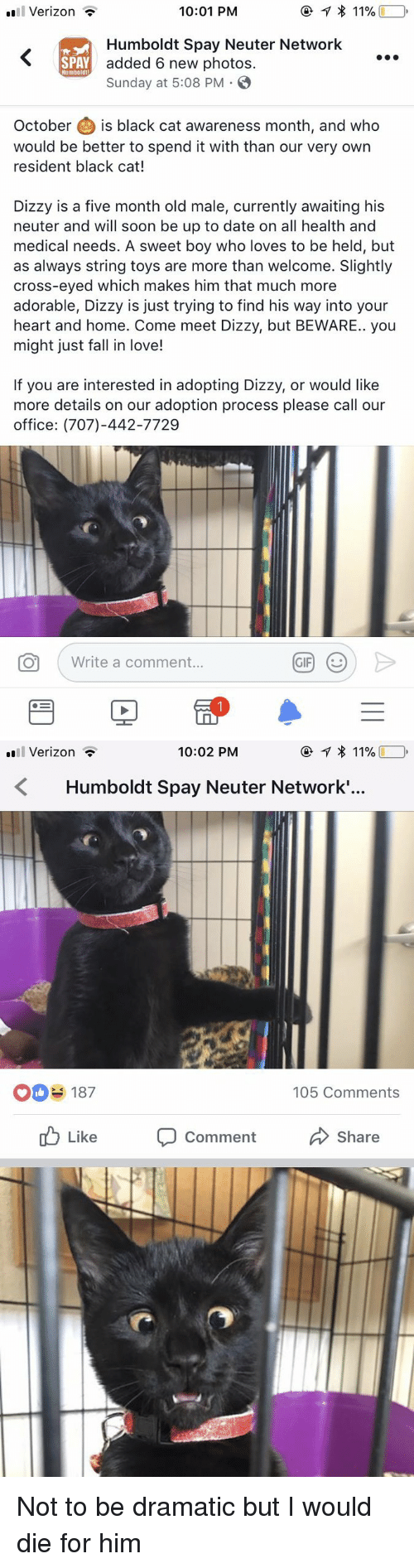Fall, Love, and Soon...: Verizon -  10:01 PM  Humboldt Spay Neuter Network  added 6 new photos.  Sunday at 5:08 PM .  SPAY  Humboldt  October is black cat awareness month, and who  would be better to spend it with than our very own  resident black cat!  Dizzy is a five month old male, currently awaiting his  neuter and will soon be up to date on all health and  medical needs. A sweet boy who loves to be held, but  as always string toys are more than welcome. Slightly  cross-eyed which makes him that much more  adorable, Dizzy is just trying to find his way into your  heart and home. Come meet Dizzy, but BEWARE.. you  might just fall in love!  If you are interested in adopting Dizzy, or would like  more details on our adoption process please call our  office: (707)-442-7729  O  Write a comment   Verizon *  10:02 PM  Humboldt Spay Neuter Network.'..  O187  105 Comments  ub Like Comment  Share <p>Not to be dramatic but I would die for him<br/></p>