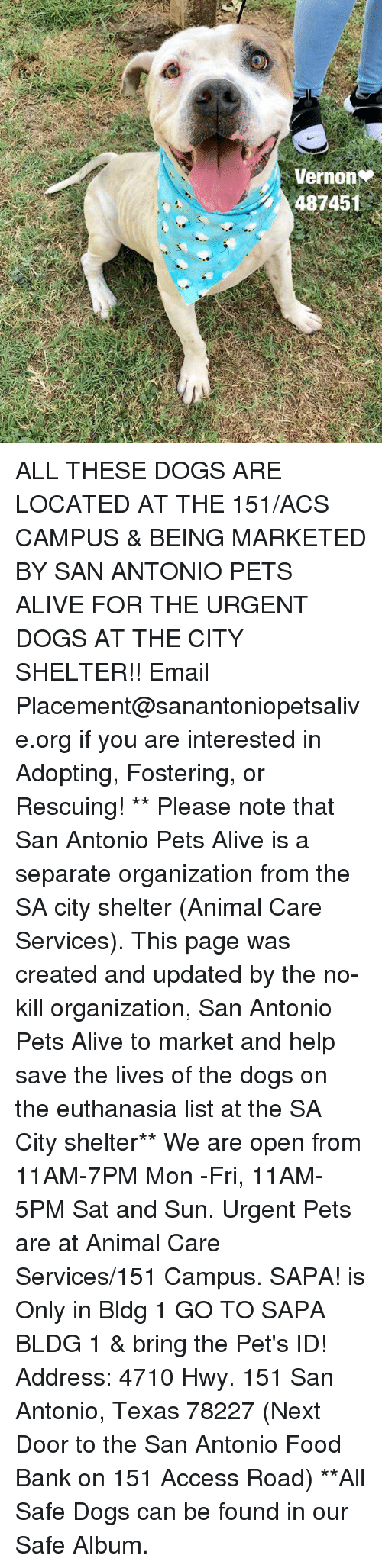 Alive, Dogs, and Food: Veron  48745 ALL THESE DOGS ARE LOCATED AT THE 151/ACS CAMPUS & BEING MARKETED BY SAN ANTONIO PETS ALIVE FOR THE URGENT DOGS AT THE CITY SHELTER!!  Email Placement@sanantoniopetsalive.org if you are interested in Adopting, Fostering, or Rescuing!                                                                                                                                                                                                                                                                                                                                                             ** Please note that San Antonio Pets Alive is a separate organization from the SA city shelter (Animal Care Services). This page was created and updated by the no-kill organization, San Antonio Pets Alive to market and help save the lives of the dogs on the euthanasia list at the SA City shelter**  We are open from 11AM-7PM Mon -Fri, 11AM-5PM Sat and Sun. Urgent Pets are at Animal Care Services/151 Campus. SAPA! is Only in Bldg 1 GO TO SAPA BLDG 1 & bring the Pet's ID! Address: 4710 Hwy. 151 San Antonio, Texas 78227 (Next Door to the San Antonio Food Bank on 151 Access Road) **All Safe Dogs can be found in our Safe Album.