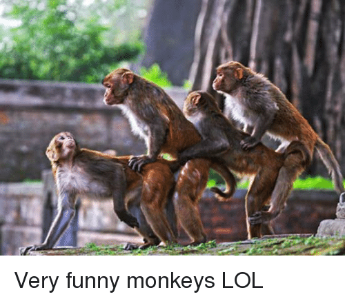 Image of: Cats Funny Lol And Monkey Very Funny Monkeys Lol Meme Very Funny Monkeys Lol Funny Meme On Meme