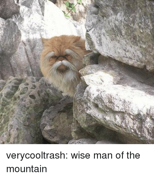Target, Tumblr, and Blog: verycooltrash: wise man of the mountain