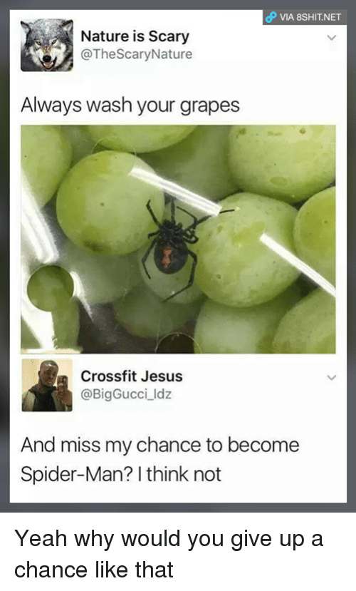 Jesus, Memes, and Spider: VIA 8SHIT.NET  Nature is Scary  @TheScaryNature  Always wash your grapes  Crossfit Jesus  @BigGucciIdz  And miss my chance to become  Spider-Man? I think not Yeah why would you give up a chance like that