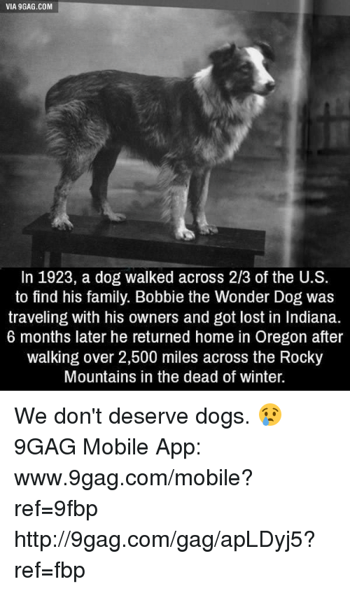 9gag, Dank, and Dogs: VIA gGAG.COM  In 1923, a dog walked across 2/3 of the U.S.  to find his family. Bobbie the Wonder Dog was  traveling with his owners and got lost in Indiana.  6 months later he returned home in Oregon after  walking over 2,500 miles across the Rocky  Mountains in the dead of winter. We don't deserve dogs. 😢 9GAG Mobile App: www.9gag.com/mobile?ref=9fbp  http://9gag.com/gag/apLDyj5?ref=fbp