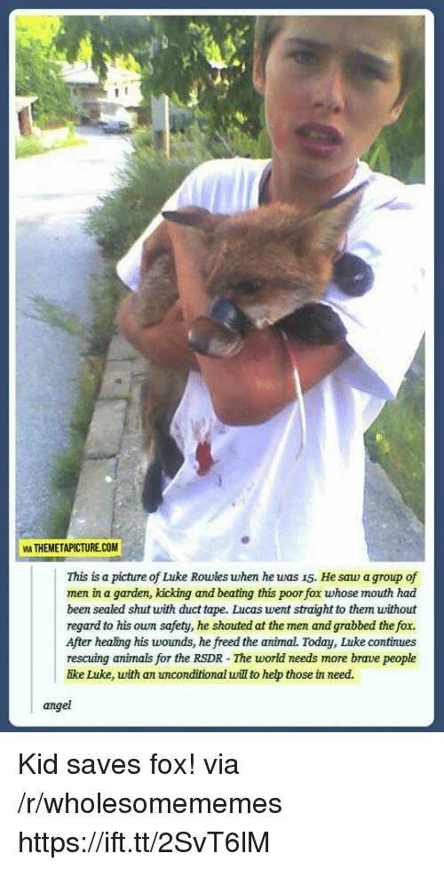 Animals, Saw, and Angel: VIA THEMETAPICTURE.COM  This is a picture of Luke Rowles when he was 15. He saw a group of  men in a garden, kicking and beating this poor fox whose mouth had  been sealed shut with duct tape. Lucas went straight to them without  regard to his own safety, he shouted at the men and grabbed the fox.  After healing his woumds, he freed the animal. Today, Luke continues  rescuing animals for the RSDR - The world needs more brave people  ike Luke, with an unconditional will to hep those in need.  angel Kid saves fox! via /r/wholesomememes https://ift.tt/2SvT6lM