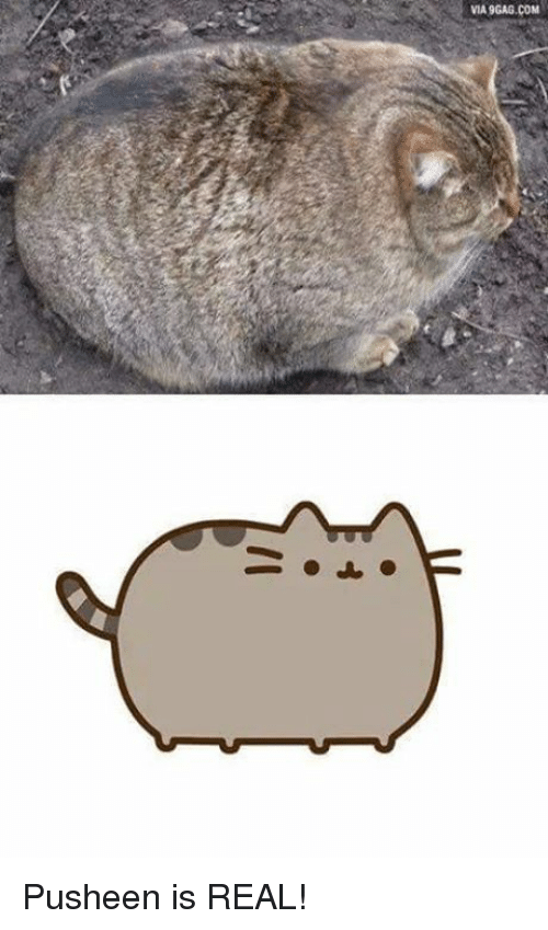 Memes, 🤖, and Pusheen: VIA9GAG.COM Pusheen is REAL!