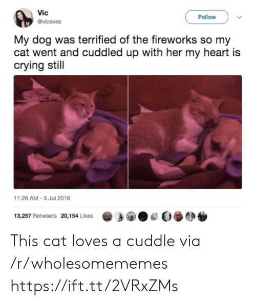 Crying, Fireworks, and Heart: Vic  @viceves  Follow  My dog was terrified of the fireworks so my  cat went and cuddled up with her my heart is  crying stil  11:26 AM-5 Jul 2016  13,257 Retweets 20,154 Likes This cat loves a cuddle via /r/wholesomememes https://ift.tt/2VRxZMs