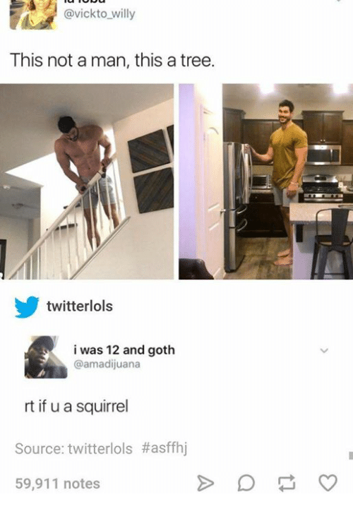 Twitter, Squirrel, and Tree: @vickto willy  This not a man, this a tree.  twitterlols  i was 12 and goth  @amadijuana  rt if u a squirrel  Source: twitter!ols #affhj  59,911 notes