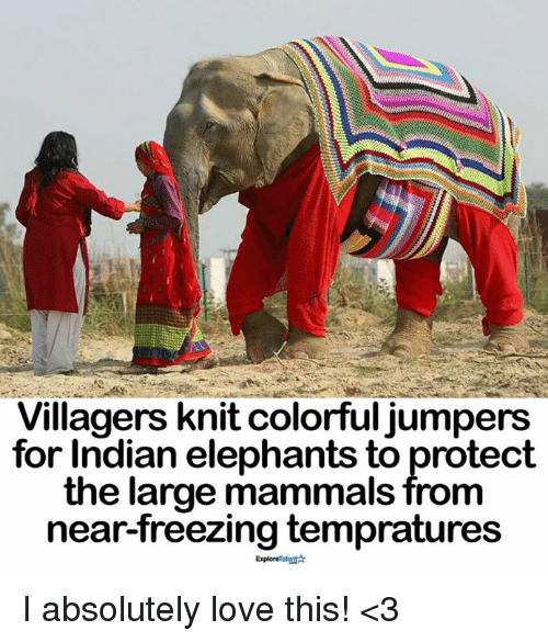 Love, Memes, and Indian: Villagers knit colorful jumpers  for Indian elephants to protect  the large mammals from  near-freezing tempratures  ExploreTalontA I absolutely love this! <3