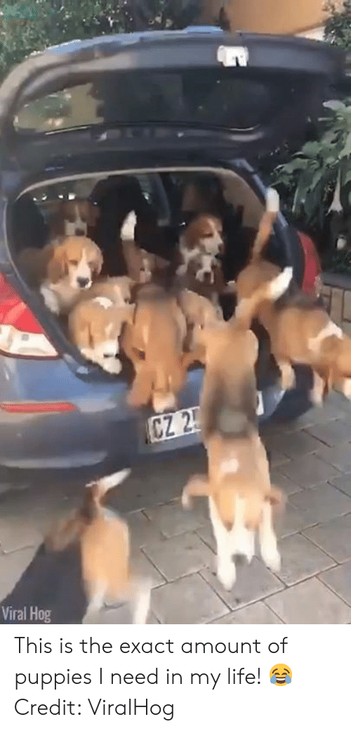 Life, Puppies, and Viral: Viral Hog This is the exact amount of puppies I need in my life! 😂  Credit: ViralHog