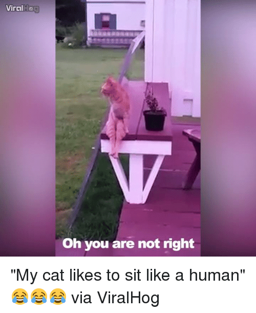 """Dank, 🤖, and Cat: Viral  Oh you are not right """"My cat likes to sit like a human"""" 😂😂😂  via ViralHog"""