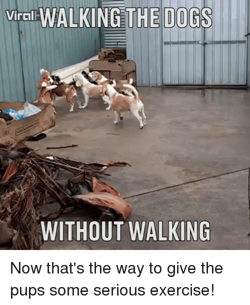 viral walking the dogs out walking now thats the way 10090247 viral walking the dogs out walking now that's the way to give the