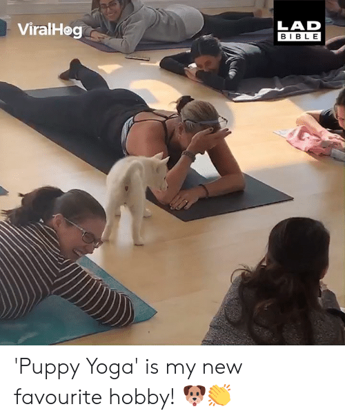 Dank, Bible, and Puppy: ViralHeg  LAD  BIBLE 'Puppy Yoga' is my new favourite hobby! 🐶👏