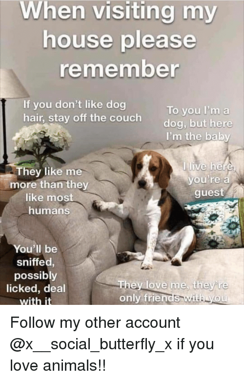 Animals, Friends, and Love: visiting  When my  house please  remember  If you don't like dog  hair,  To you I'm a  dog, but here  stay off the couch  I'm the baby  live he  hey like me  more than they  like mos  humans  vou'te a  guest  You'll be  sniffed,  possibly  licked, deal  with it  only friends with yoU Follow my other account @x__social_butterfly_x if you love animals!!