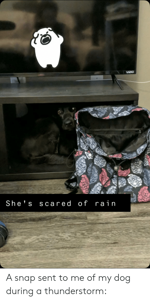 VIZIO She's Scared of Rain a Snap Sent to Me of My Dog