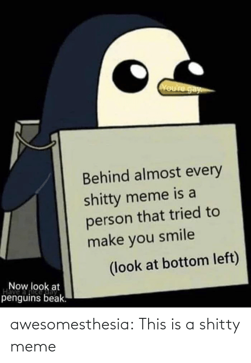 Meme, Tumblr, and Blog: Voure gay  Behind almost every  shitty meme is a  person that tried to  make you smile  (look at bottom left)  Now look at  Have  penguins beak. awesomesthesia:  This is a shitty meme