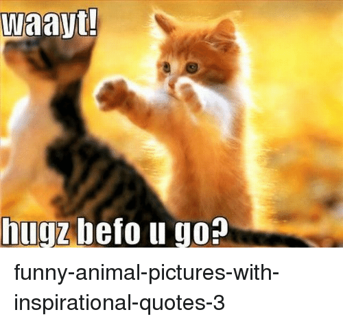 Waayt Hugz Bef Funny Animal Pictures With Inspirational Quotes 3