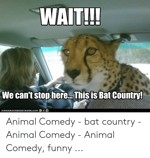 Funny, Animal, and Comedy: WAIT!!!  We can't stop here... This is Bat Country!  ICANHASOHEE2BUR GER COM Animal Comedy - bat country - Animal Comedy - Animal Comedy, funny ...
